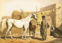 purosangue-arabo-storia