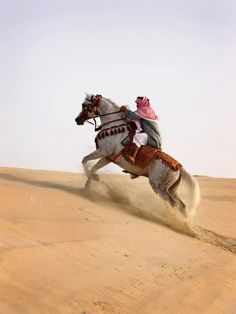 cavallo-arabo-purosangue-foto-storia