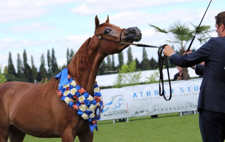 MALENA bronze medal Bronze Medal Yearling Filly AHO World Cup Sorrel Arabian Filly (2016)