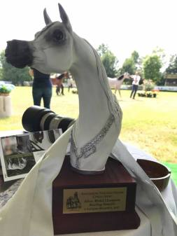 silver medal champion at European C MALENA Sorrel Arabian Filly (2016)